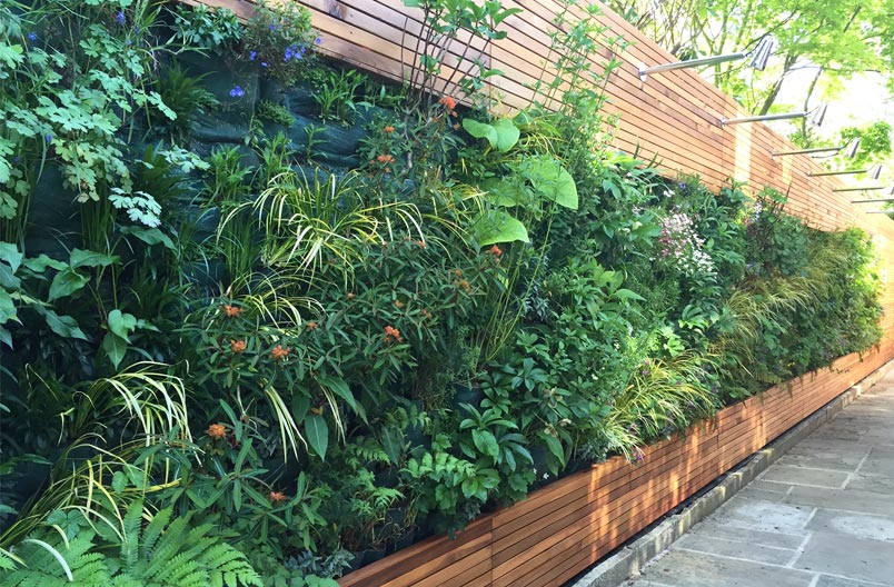Grange-Road-garden